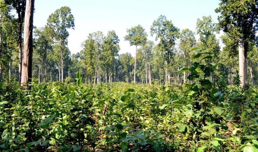 प्रभावकारी बनेन वैज्ञानिक वन व्यवस्थापन