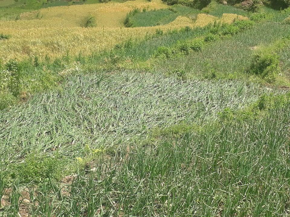 कृषकलाई आत्मनिर्भर बनाउन खेती प्रणाली बदल्दै